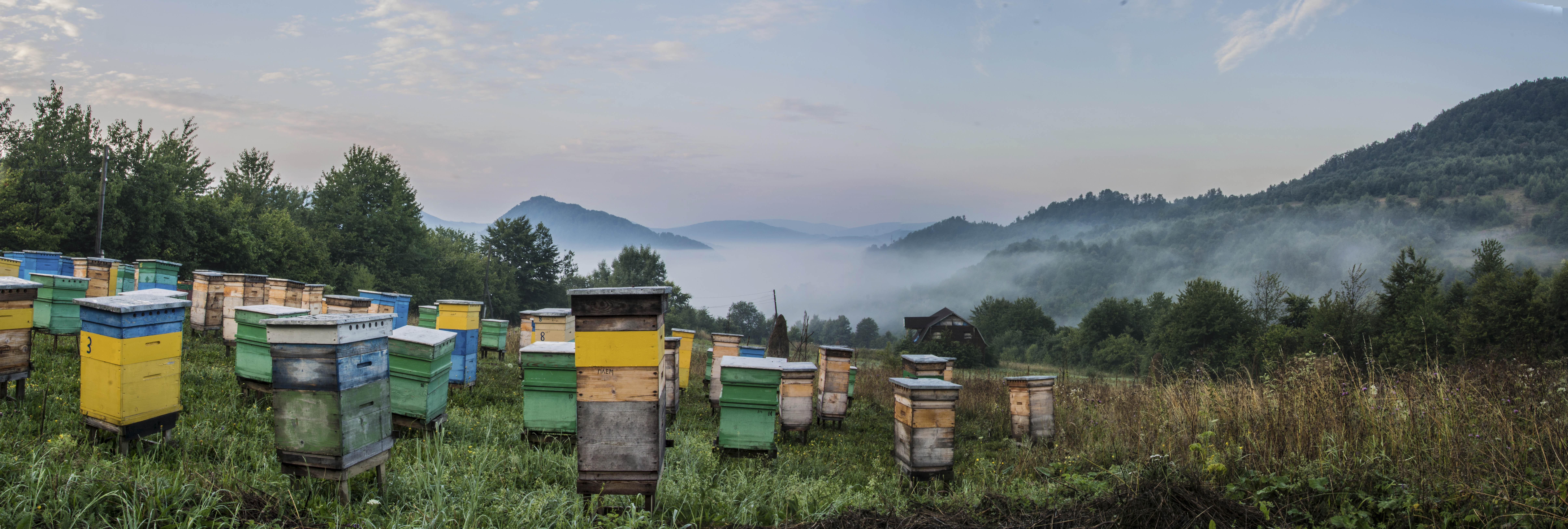 мед-натуральний