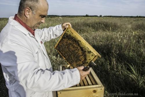 Пасека. Закарпатский племенной пчелопитомник Хомы